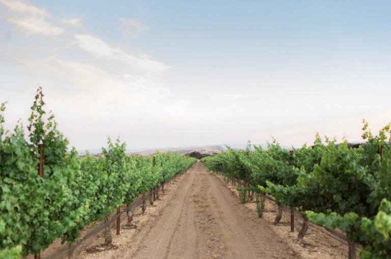 a-firestone-vineyard-wedding_02